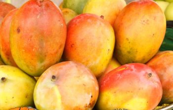 african-mango personne particulier